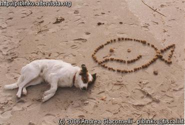 shira_beach_pesce-xxr-web